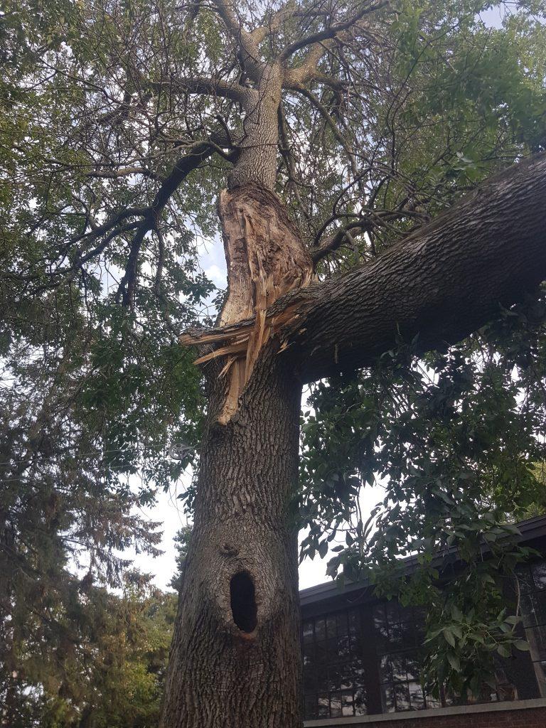 evaluation-des-dommages-arbre