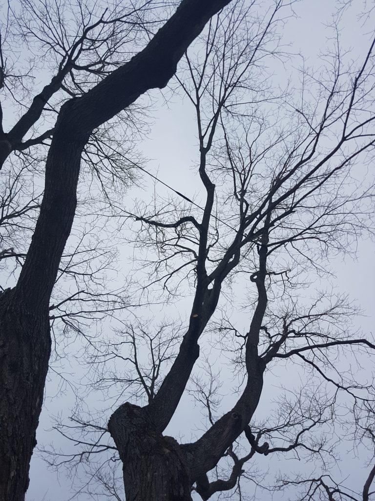 haubanage-arbre