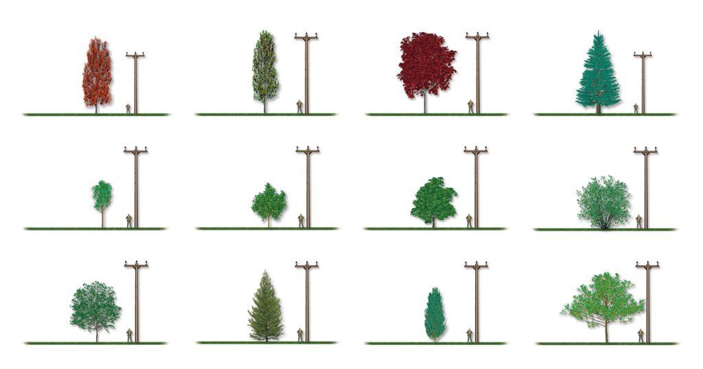 Introduction-aux-essences-des-arbres