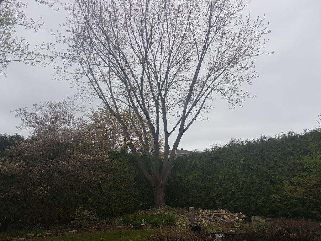 taillage-arbre-professionnel